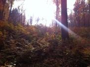 podzimni_krajinou_2013_03