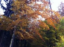 podzimni_krajinou_2013_04